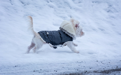 image for Winter Safety for Pets